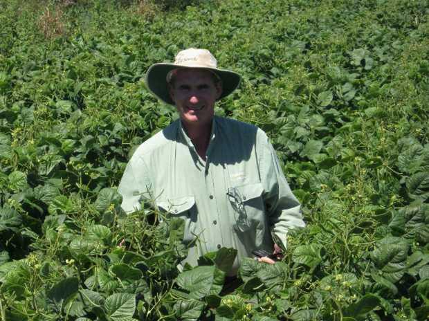 Paul McIntosh checks a paddock of mung beans.