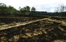 Bushfires had burnt out large areas of bush and farmland near Mt Flinders and Peak Crossing.