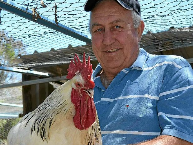 NEW PASTIME: John Latemore with a prized sussex rooster.
