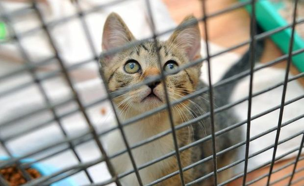 BAD IDEA: RSPCA warns people against buying pets as Christmas presents. Photo: Max Fleet / NewsMail