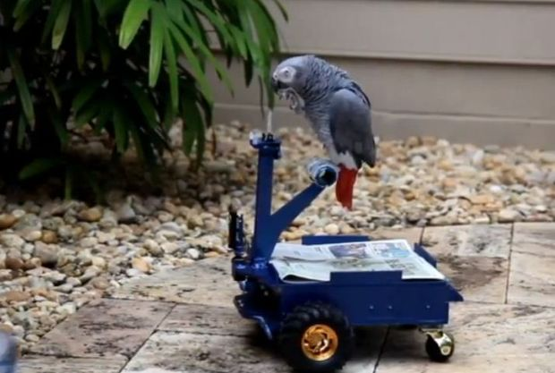 Andrew Gray has built a machine his parrot, Pepper, can operate with its beak.
