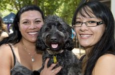 ( from left ) Tandi Mea with Marlee-Jayne Poodle cross Staffie and Nicki Lim at the St Vincents markets . Photo Nev Madsen / The Chronicle