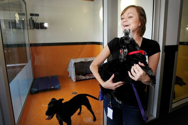 The RSPCA Wacol has over 100 dogs which are in need of a new home, Jessica Brooks with 10-year-old Harry the maltese cross poodle. Photo: Inga Williams / The Satellite