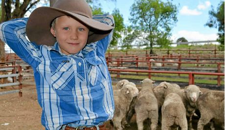 JUNIOR STOCKMAN: Declan Campbell, 5, from Wongavale, Inglewood, was in the Rose City for the weekly sheep sale with his uncle Matthew Campbell.