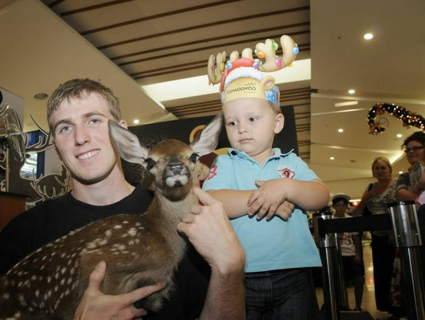 Children at Toowoomba Plaza get to cuddle a two day old deer in the lead up to Christmas. Dan Ryan * Toowoomba Plaza holds the deer for Eithan Marris. Photo: Bev Lacey / The Chronicle