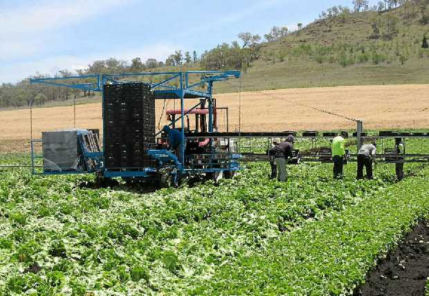 CONCERNED: Flying squads will visit farms after representatives from the Bundaberg Fruit and Vegetable Growers Association, and related horticulture agencies voiced concerns about illegal harvesters.