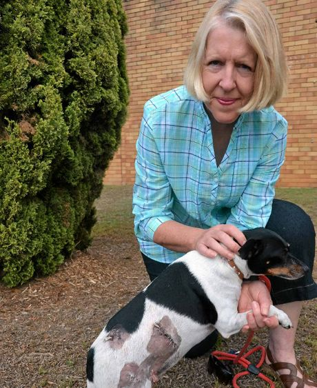 Lynda Hemmings's foxy, Jo Jo, was attacked by another dog while out walking. Mrs Hemmings says the owner of the dog just walked off without even an apology.