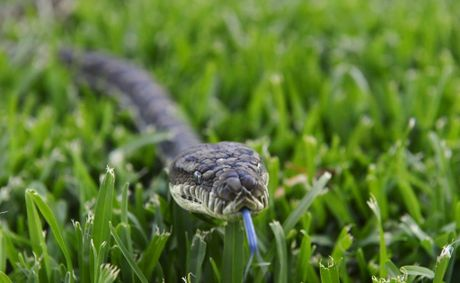 Beware of snakes this summer. Queensland Ambulance Service is urging residents and tourists to exercise caution when outdoors, in particular when walking through long grass.