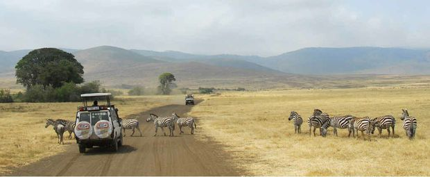 IN THE WILD: Zebra crossing during a game drive at Ngorongoro Crater, Tanzania.