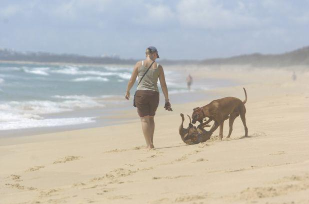 A couple of dogs running off leash on a beach.