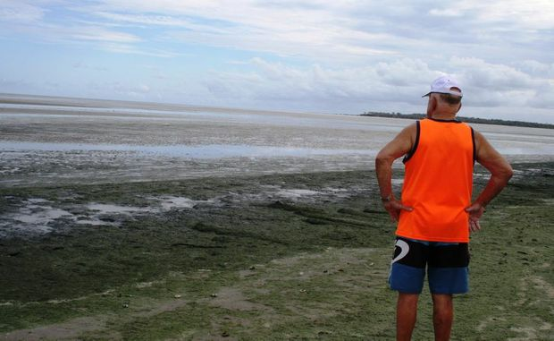 A beach-goer inspects the piles of decomposing seaweed at Dundowran beach.
