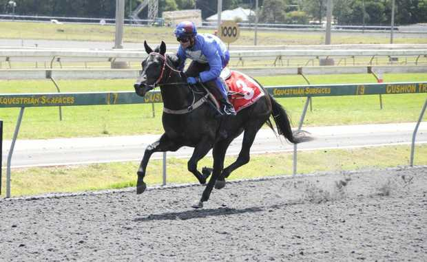 Bradbury Chocolate aiming for a Clifford Park feature win on Saturday.
