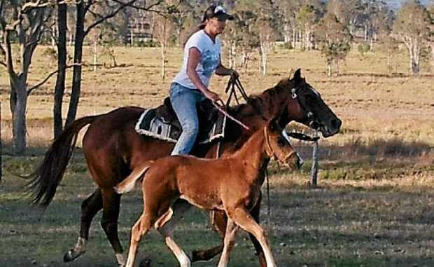 Louise Louden already has foal Ruby following her barrel racing mother' Zena's footsteps.