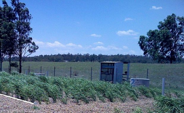 The new reed beds at the Helidon Sewage Treatment Plant could easily be mistaken for landscaping.