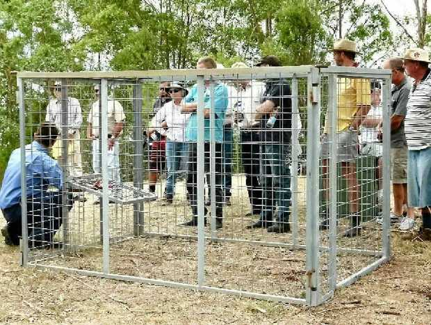INSIDE THE BOX: Traps can be effective but have to be prepared correctly. Here Ben Curley, Gympie Regional Council, demonstrates the use of a trap that is available for landholders to borrow that breaks down into an easily transportable flat pack.