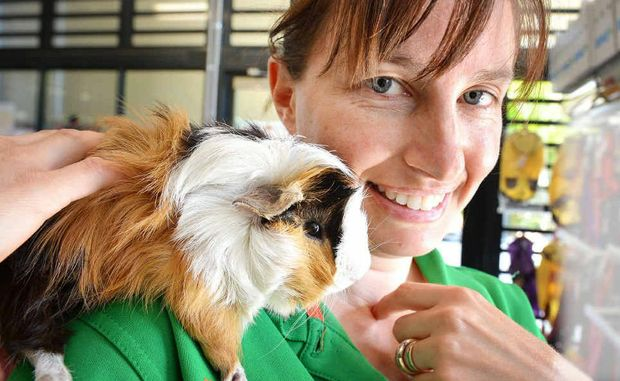 RSPCA shelter manager Vanessa Richardson with one of six guinea pigs dumped at a Gympie car park.