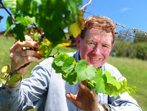 Viticulturist and co-owner of Gecko Valley Winery Tony McCray stands with a vine he's nurtured back to life, after discovering it survived the winery's 2011 fire.