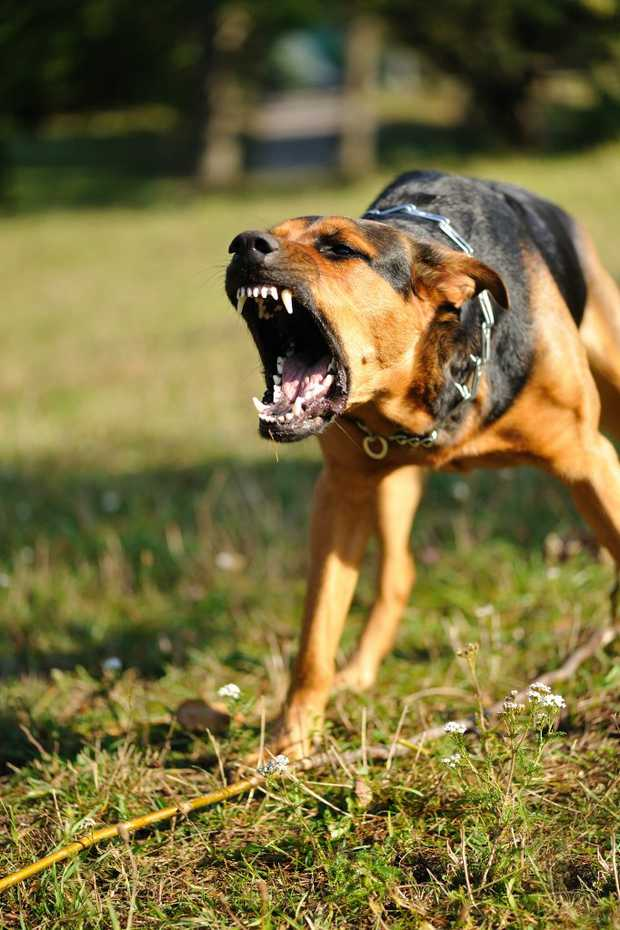 """Police officer labels hunting dogs """"lethal weapons""""."""