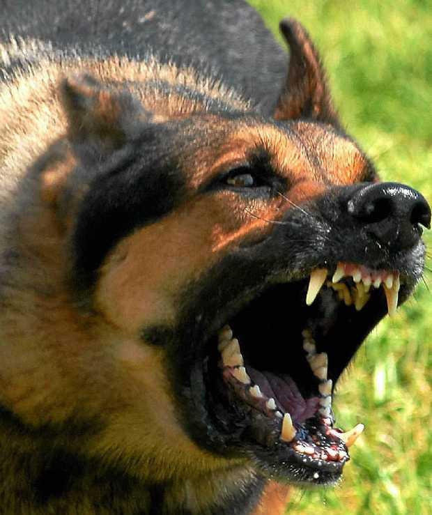 A dog bares his teeth.