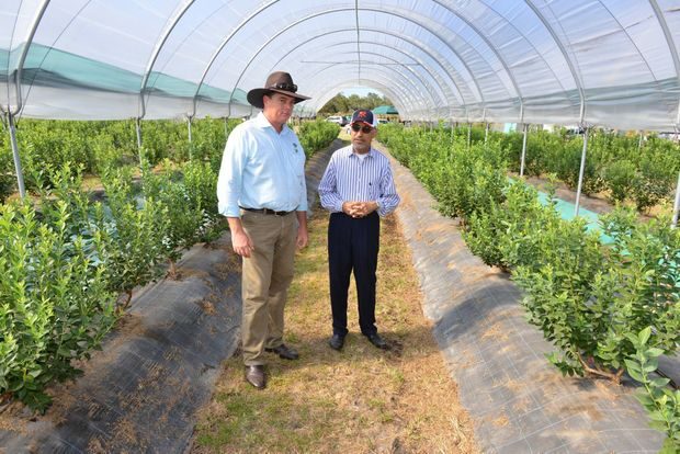 INTERNATIONAL VISIT: Bundaberg Fruit and Vegetable Growers executive officer Peter Hockings with one of the delegates from the Kingdom of Saudi Arabia Mahdi Al-Ramadan on a visit to Perfection Fresh. Photo: Scottie Simmonds / NewsMail