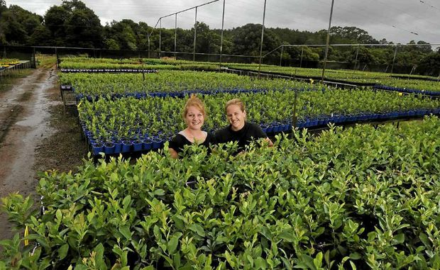 BLUEBERRY BONANZA: Natalie Bell (right) with her sister Georgina Upton preparing for increasing demand.