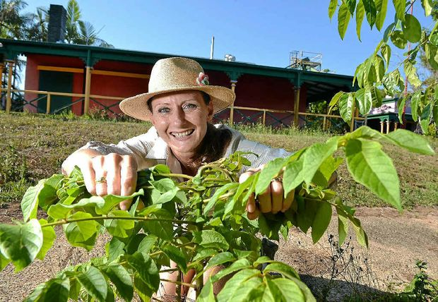 GROWING CONCERN: Cath Manuel is starting the Centre for Growing Sustainability at the old nut factory in the Big Pineapple complex.