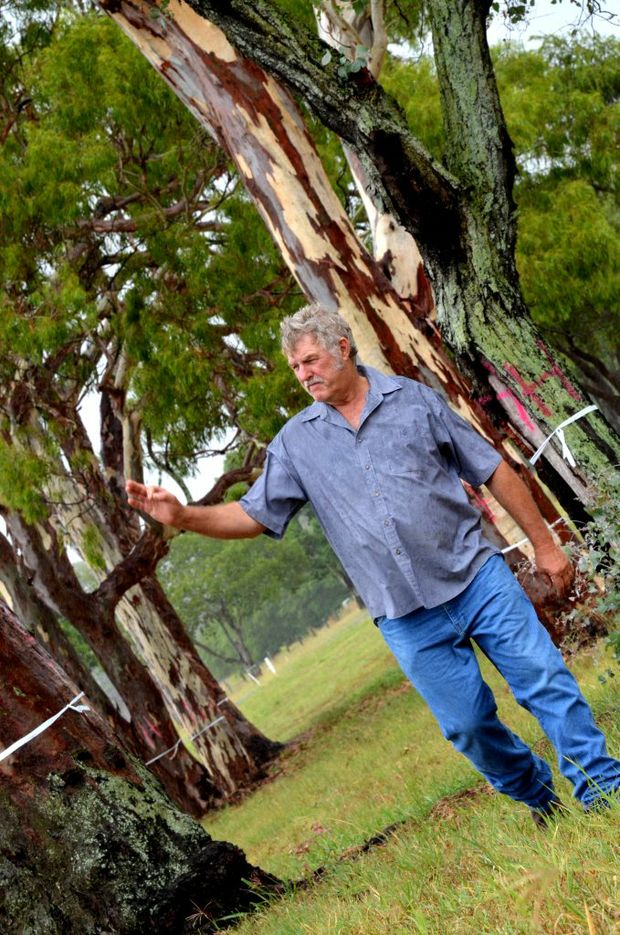 NOT HAPPY: Larry McArthur thinks it's an outrage that these trees are being investigated to be cleared.
