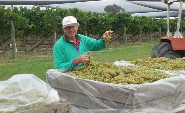 Robert Channon of Robert Channon Wines is hoping favourable conditions continue up until picking next month.