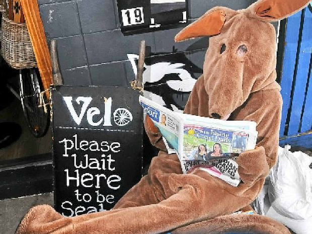 TOO-ROO: Tobias Smissen relaxes in a kangaroo suit with a paper and coffee after an evening sandbagging The Velo Project Cafe to prevent Australia Day flooding.