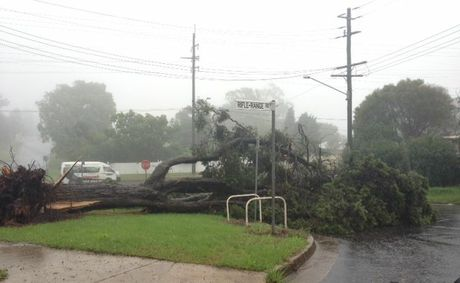 A tree down at the intersection of Stuart St and Rifle Range Rd‏.