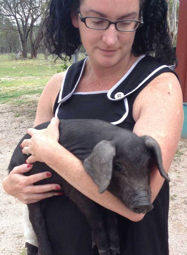 SURVIVOR: Nicolle Kelly with the solo surviving piglet from the shooting incident on her Dalveen property. The piglet is being treated for a gunshot pellet in its leg.