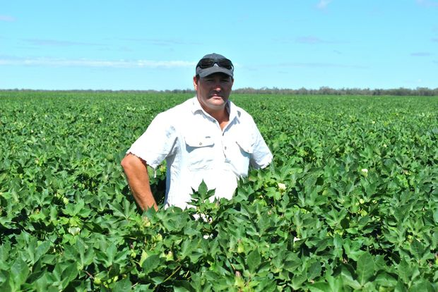 DRY SPELL: St George irrigator Andrew Sevil says he is expecting lower yields from his 2013 cotton crop due to dry weather and periods of extreme heat. - Lyndon Keane