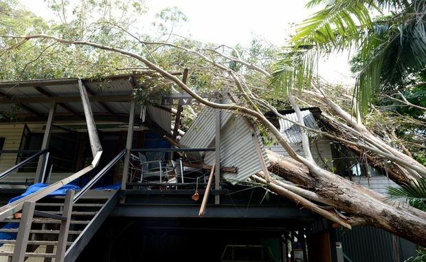 Warren Higgins house with a tree through it.