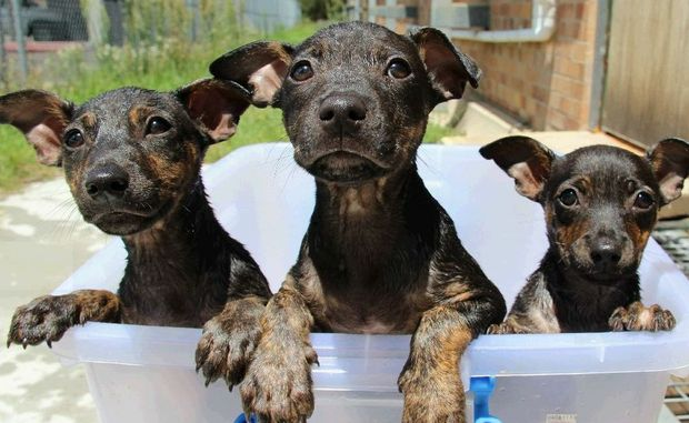These puppies were rescued from the drink during the Oswald Floods