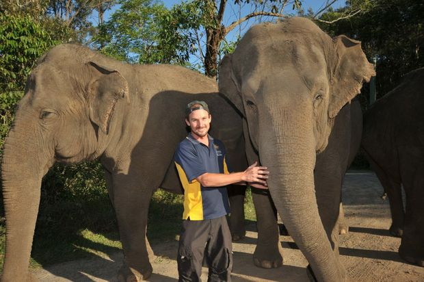 Siam the Asian elephant has died at Australia Zoo. She is pictured here (left) with Daily photographer, Brett Wortman and Sabu (right)