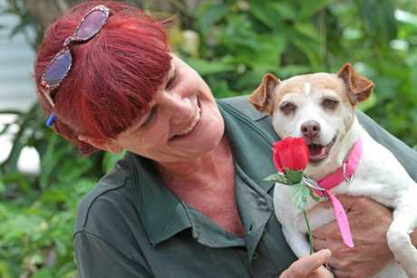 Melissa McGarvey of Sunshine Coast Animal Refuge is hoping Lizzie finds a lifetime valentine.