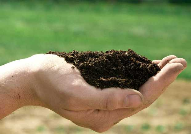 QUALITY: Good soil makes the difference.