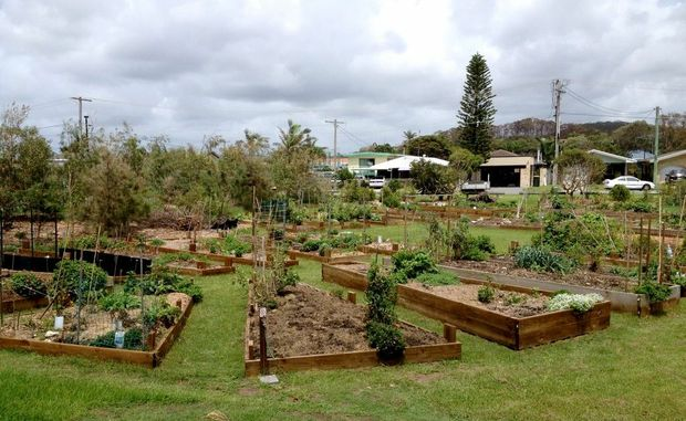 Southern beaches community garden in Tugun.