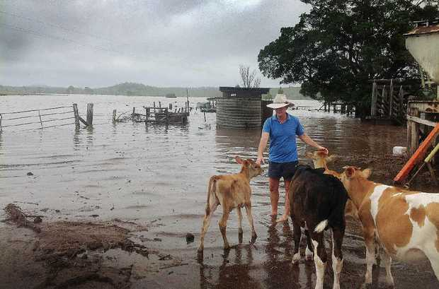 INUNDATED: Cr James Hanson is one of many Fraser Coast graziers hit hard by the recent floods.