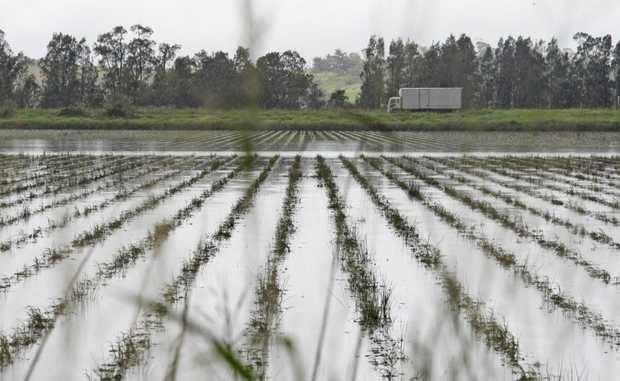Farm paddock's on Tweed Valley Way under flood, near Tumbulgum.