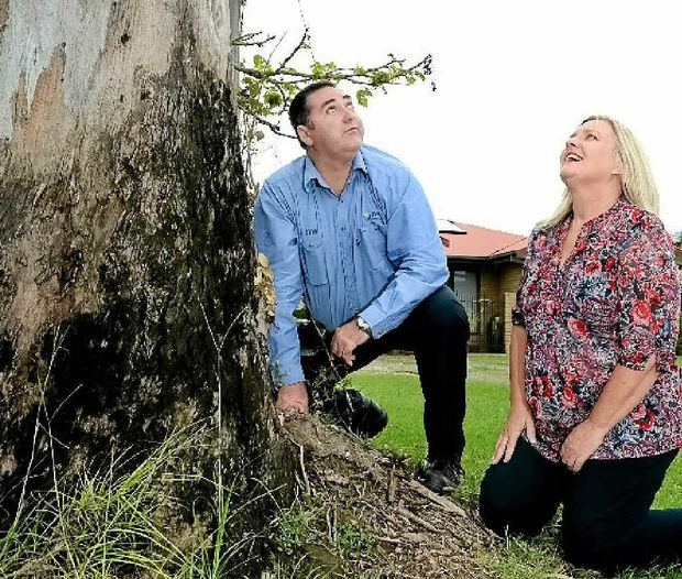 DISMAYED: Parks operations co-ordinator Matt McCann and Cr Carolyn Byrne with the vandalised tree in Kingscliff. Left: The sign the council plans to put up.