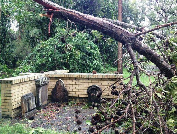 A tree has fallen at Pilgrim Memorial Park, Brunswick Heads.