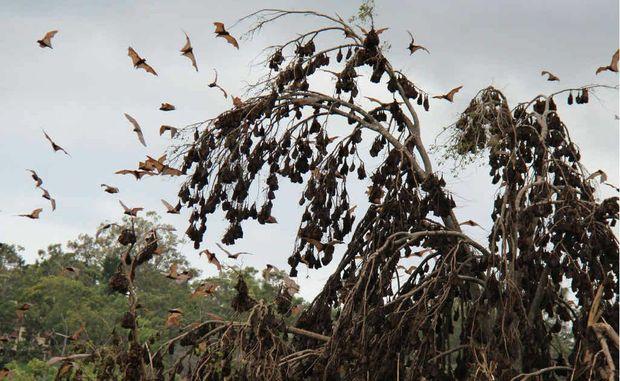 Health fears soar over two colonies of bats near Warwick High School.