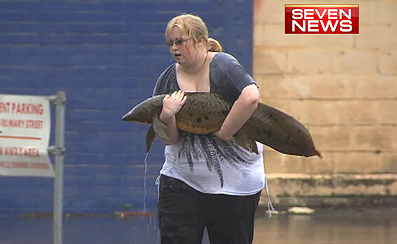 A Gympie woman carries a lungfish to safety after it ended up in the carpark at a hotel.