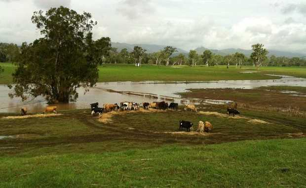 Dave and Leonie Paish's dairy farm in the Boyne Valley has been cut off since Tuesday night.