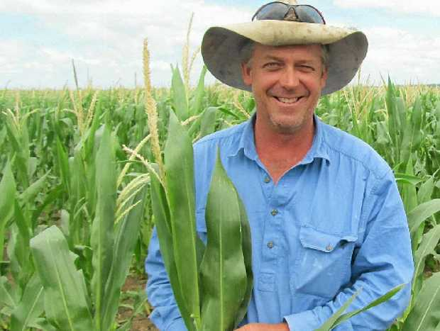 Clifton grain producer Layton Free is optimistic his late corn crop will benefit from the recent deluge, however is uncertain of the fate of his early sorghum.