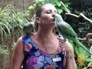 Parrots show their party tricks