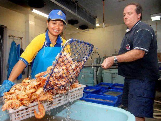 GOOD HAUL: Mackay Reef Fish Supplies owner David Caracciolo and Neng Nurhayati with a batch of prawns.