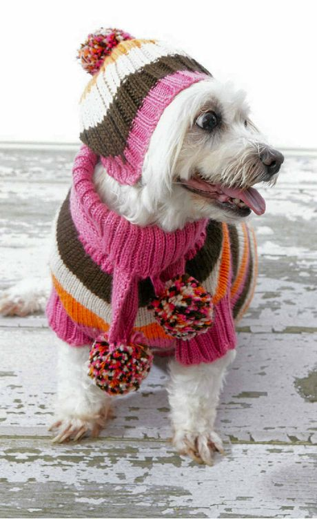WINTER WARMTH: Remember to keep your best friend warm and vaccinated this winter.