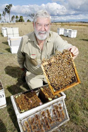 bees09a President of the Queensland Beekeepers Association Trevor Weatherhead with some of his bee hives. Photo: Sarah Harvey JN0910HA